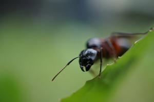 ant-807265_1280
