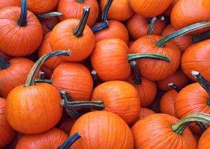 fall-950442_1280