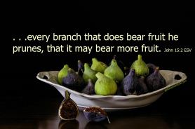 GOA Meme John 15 2 figs