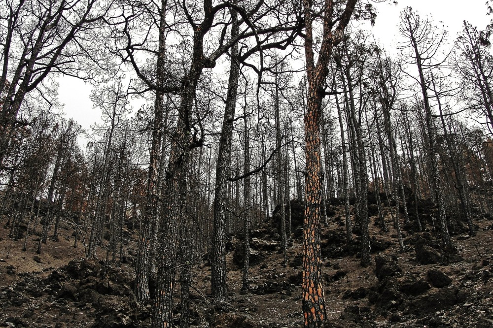 burnt-forest-982071_1920